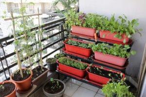 Grün, gesund und geschmacksintensiv: drei Kräuter für den Balkon